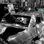 Pontiac Acadian 1966 car on which the hood was taken and is available for the creation of an industrial table or artwork.